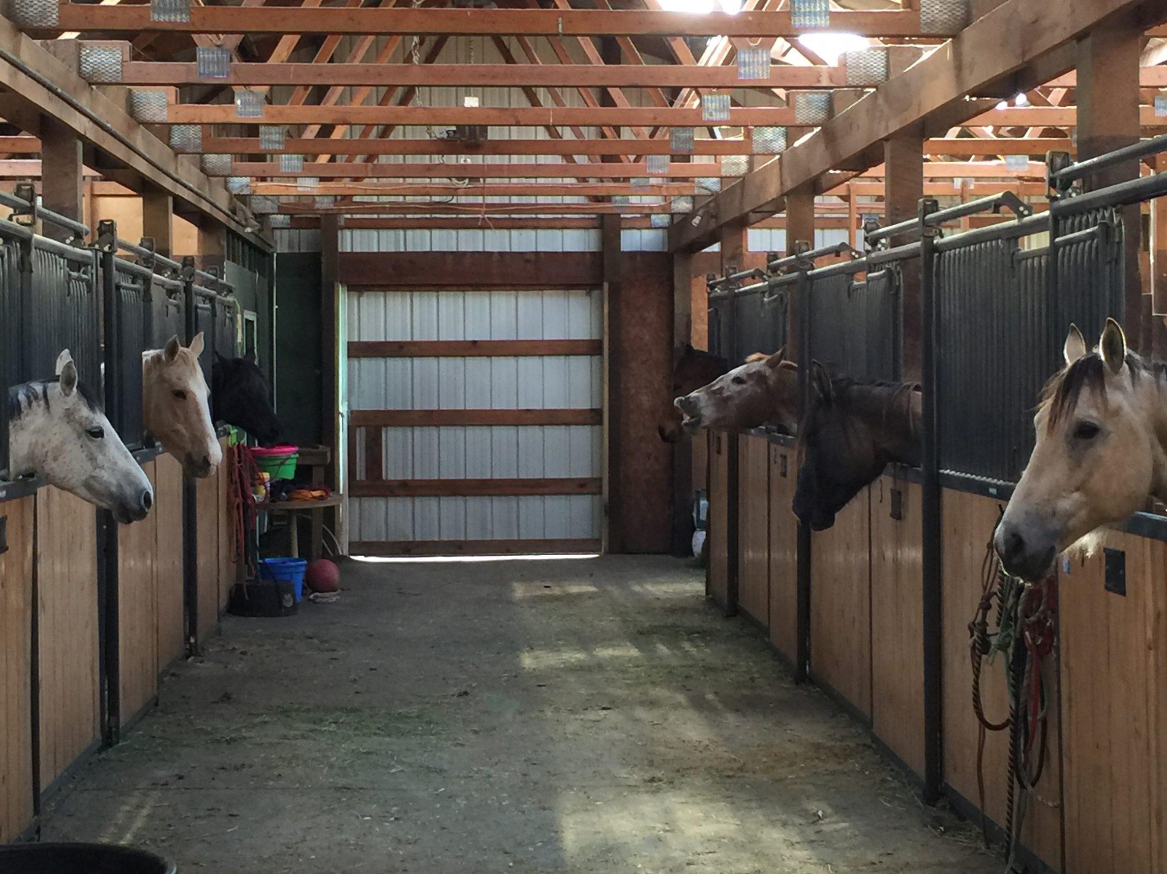 LIV Sotheby's' International Realty Broker, Alissa Skildheim, Rides to Horses' Rescue