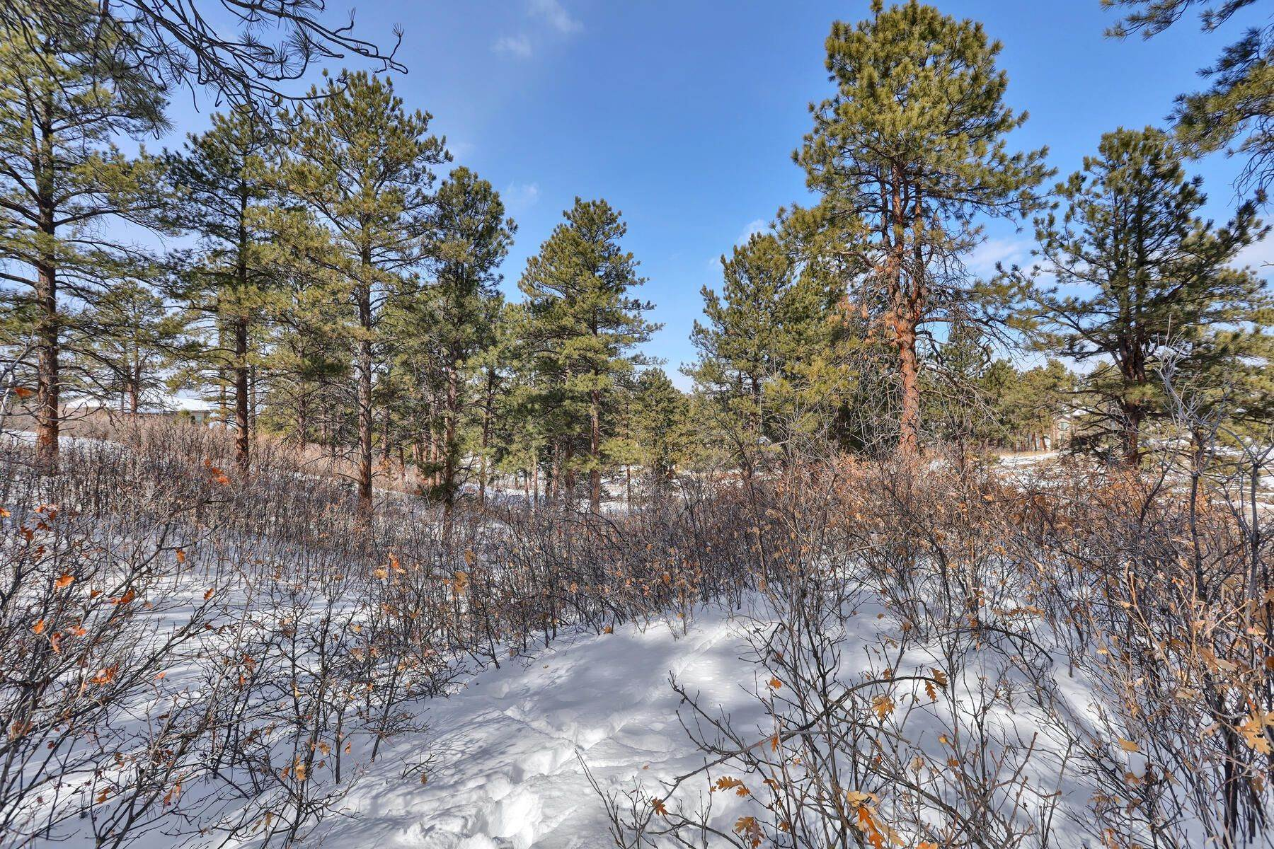 18. Land for Active at 1731 Avenida Del Sol, Castle Rock, Co, 80104 1731 Avenida Del Sol Castle Rock, Colorado 80104 United States