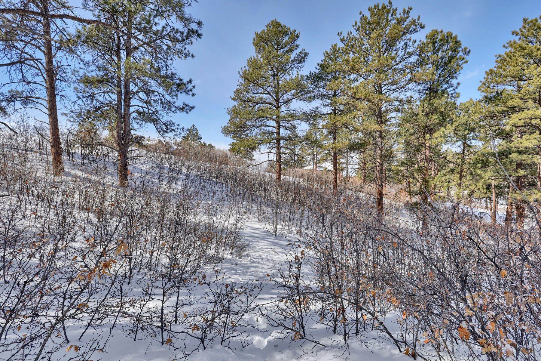 17. Land for Active at 1731 Avenida Del Sol, Castle Rock, Co, 80104 1731 Avenida Del Sol Castle Rock, Colorado 80104 United States