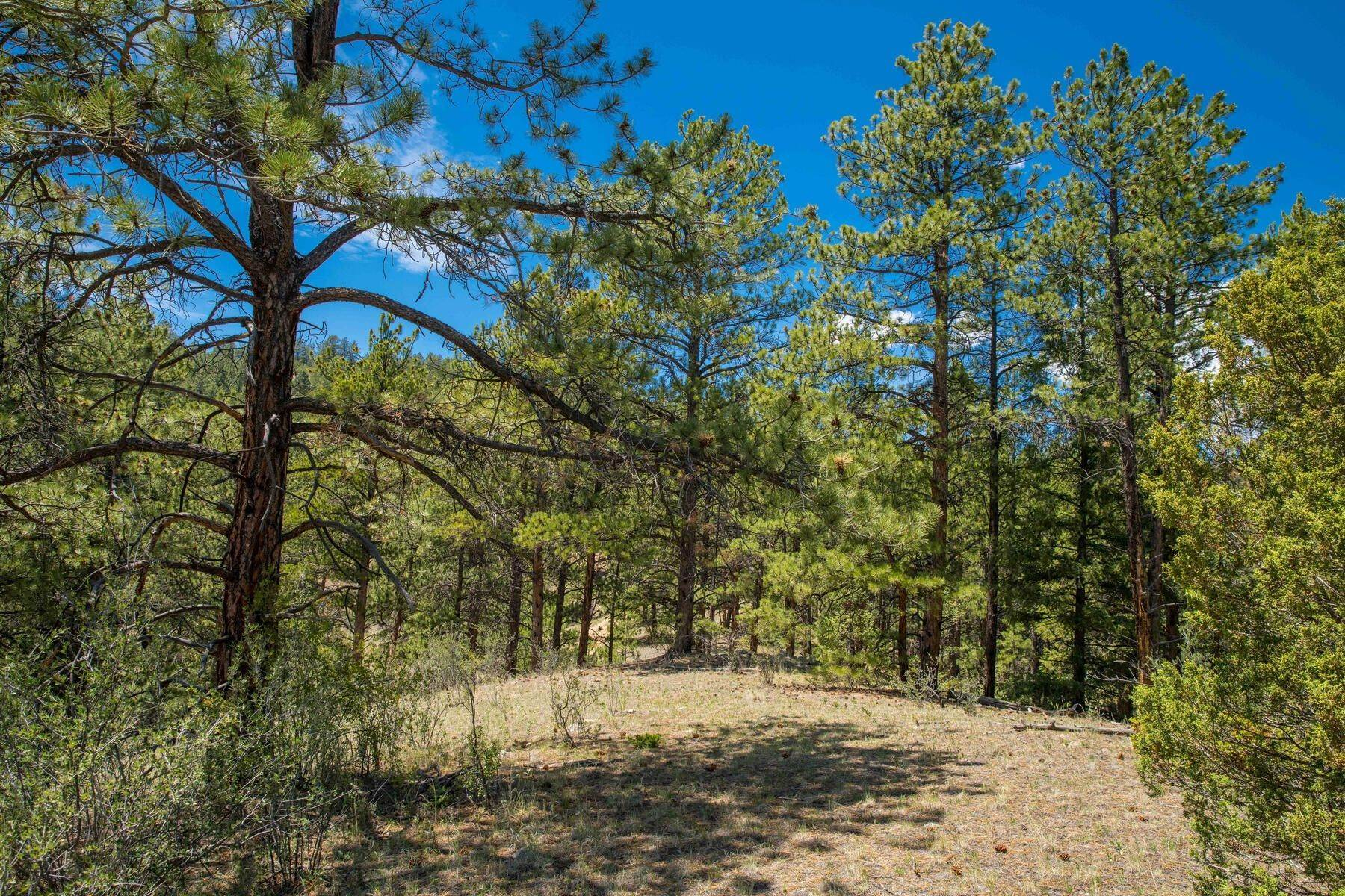 18. Land for Active at 14433 Lot 7 Elk Creek Road, Pine, Co, 80470 14433 Lot 7 Elk Creek Road Pine, Colorado 80470 United States